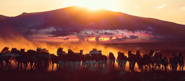 Group of Horses Running HD Photo Montage 04 - Stock Photo