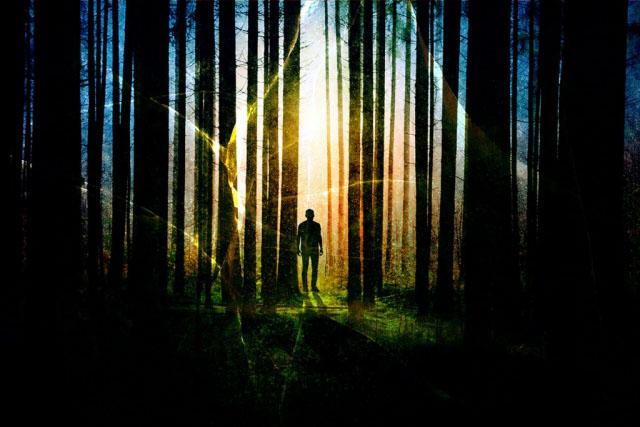 Surreal Apocalyptic Woods 01 - Stock Photo
