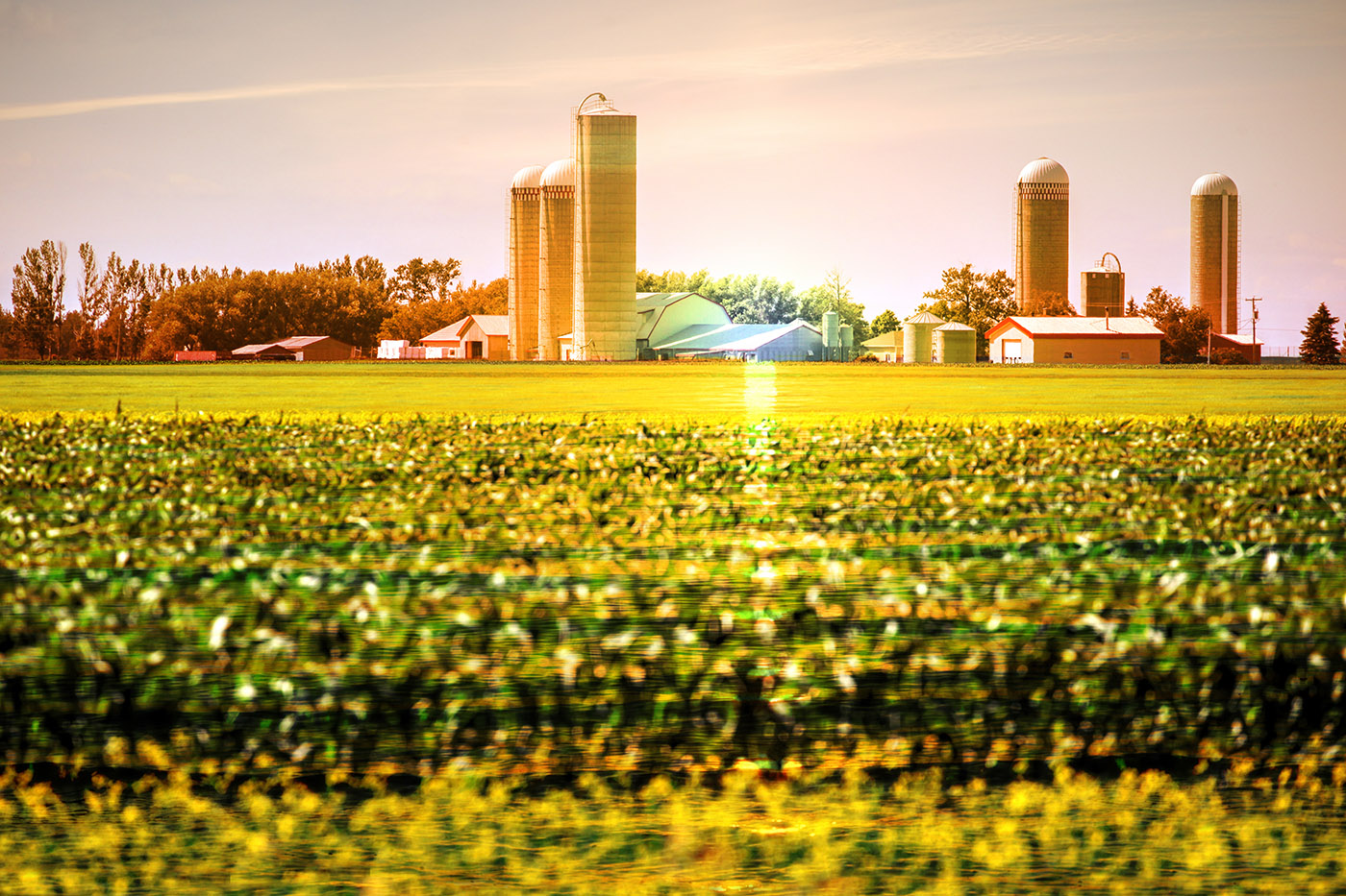 Modern Farmland and Agriculture Real Estate - Stock Photo